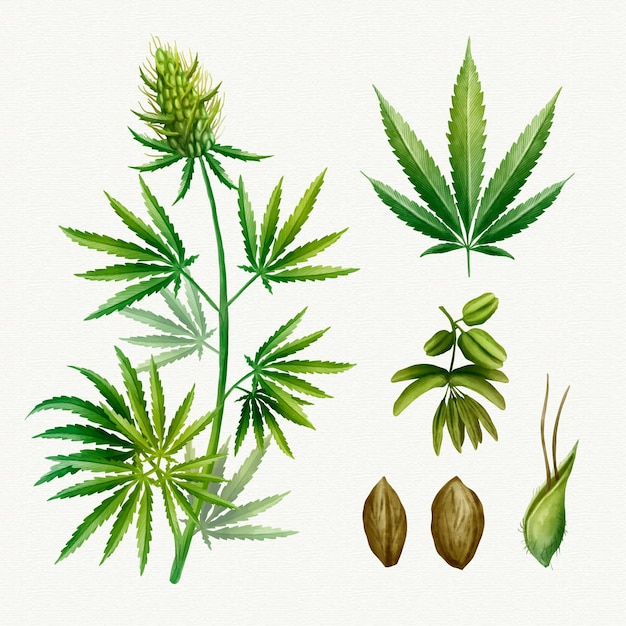 Botanical cannabis leaves pack Free Vector