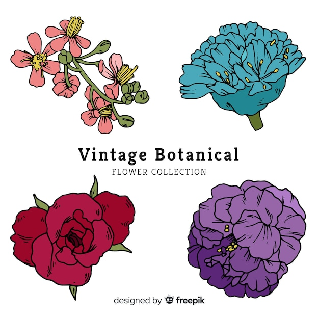 Botanical flower and leaves collection Free Vector