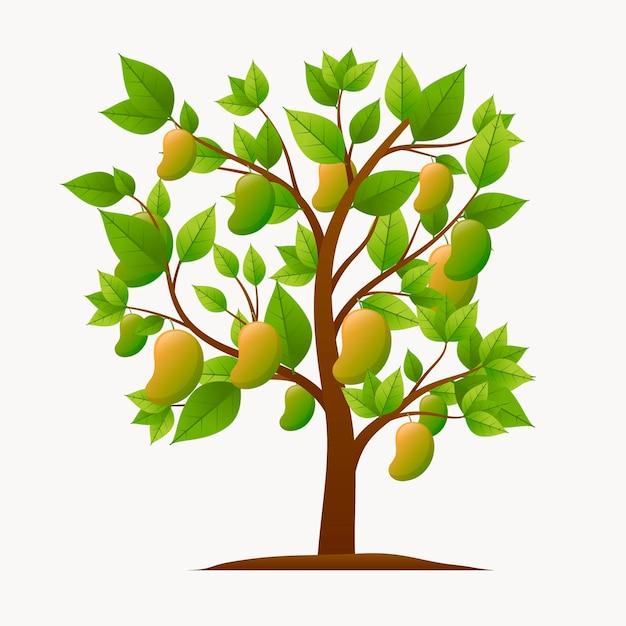 Botanical mango tree illustration Free Vector
