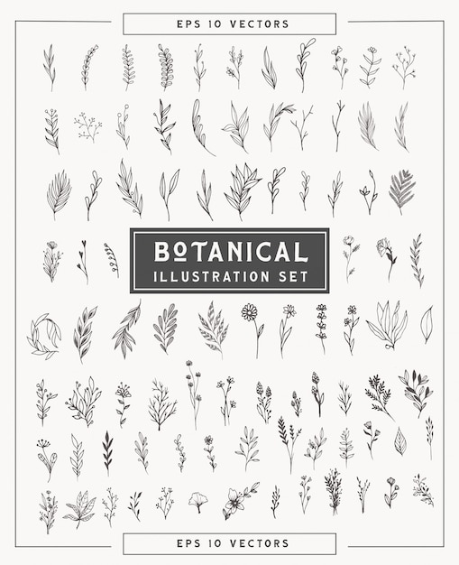Botanical minimal plants and flowers set . simple illustrations hand drawn in line art style. isolated elements for graphic design, transparent clip art for your creativity. Premium Vector