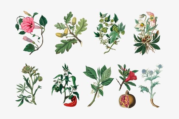 Insieme dell'illustrazione della pianta botanica Vettore gratuito