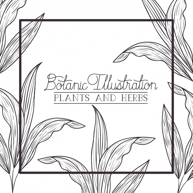 Botanical plants and herbs square frame Premium Vector