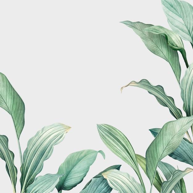 Botany card Free Vector