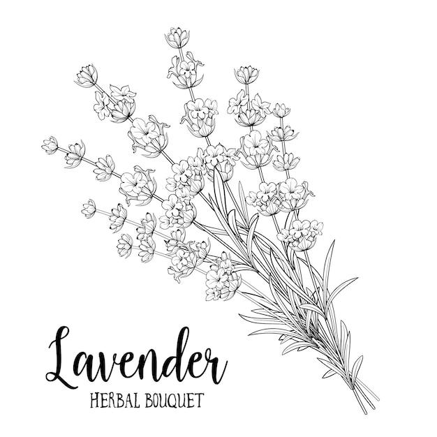 Bouquet of lavender flowers. Premium Vector