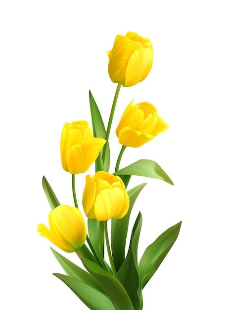 白地に春の黄色いチューリップの花束。 無料ベクター