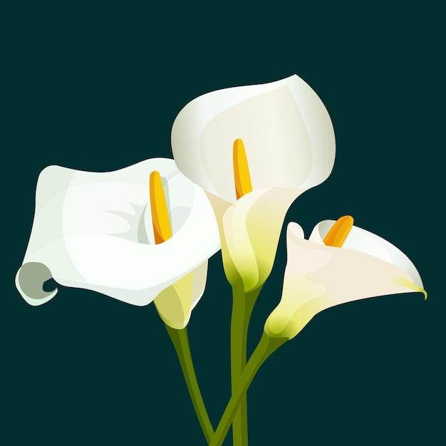 濃い緑色の背景に白いオランダカイウの花束。目的のための春の花の花のイラスト。完全に編集可能。天然植物ザンテデスキアエチオピカ植物の花 Premiumベクター