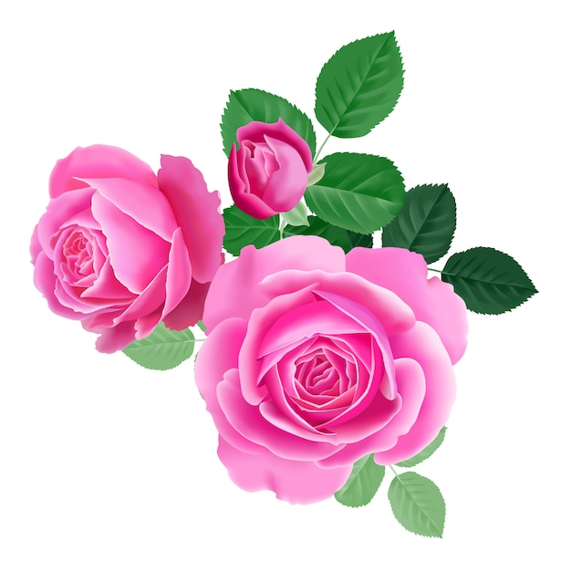 Bouquet of pink rose. Premium Vector