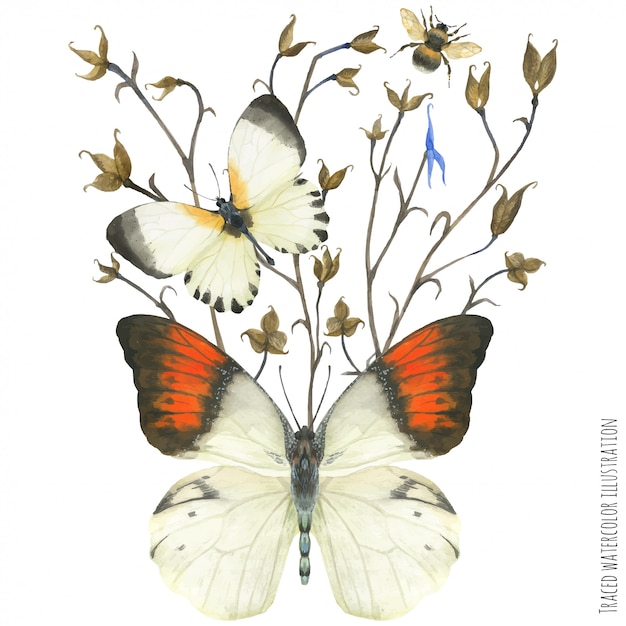 Boutonniere composition with butterflies and plant Premium Vector
