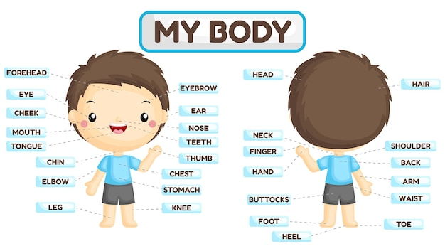 Имя частей тела мальчика Premium векторы