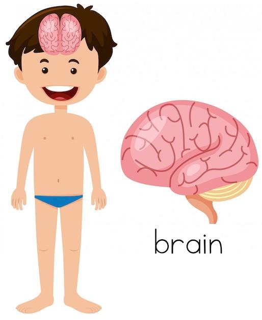 Boy with brain placement Premium Vector