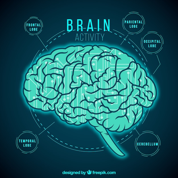 Brain activity infographic Free Vector