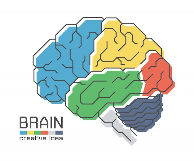 Brain anatomy with flat color design and outline stroke. creative idea concept Premium Vector