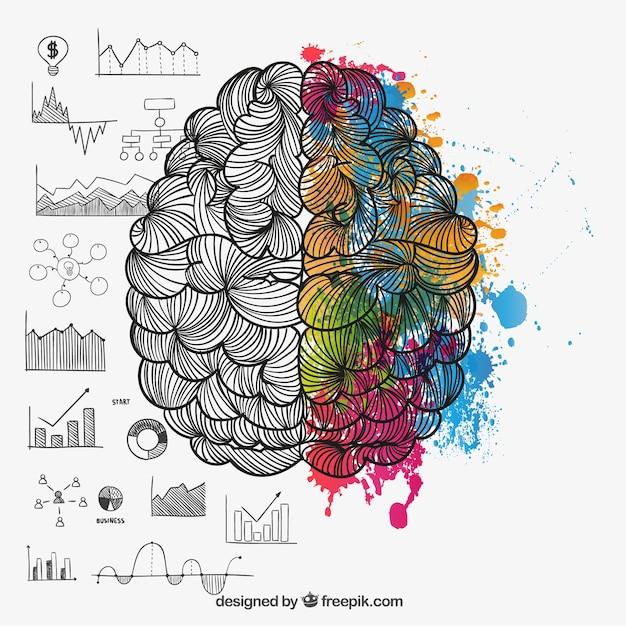 Brain hemispheres in doodle style Free Vector