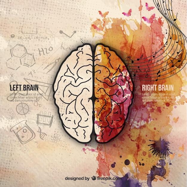 Brain hemispheres Free Vector