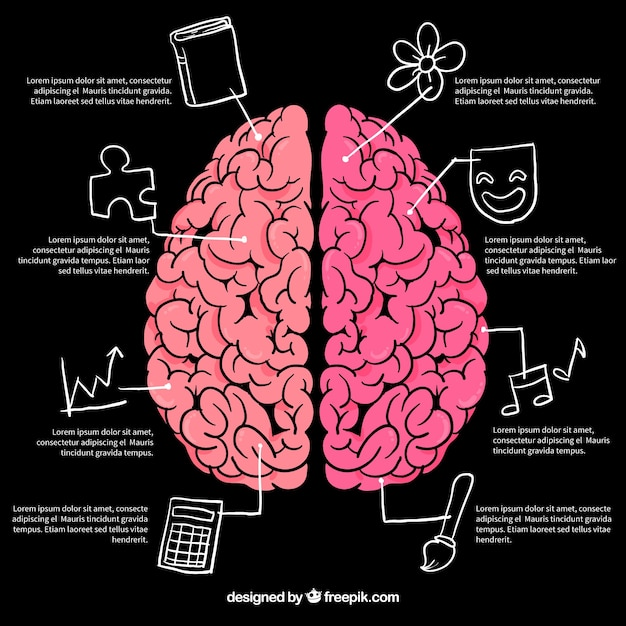 Brain infographics with drawings Premium Vector