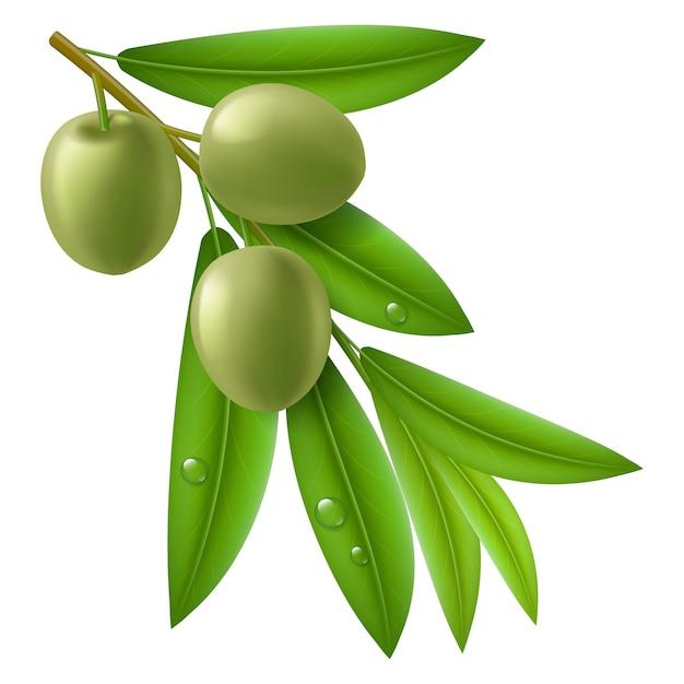 グリーンオリーブとオリーブの木の枝 Premiumベクター
