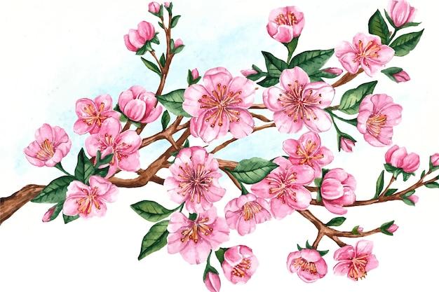 Branch of sakura flowers Free Vector