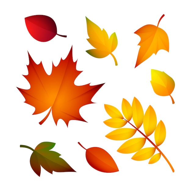Bright autumn leaves Free Vector