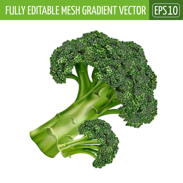 premium vector broccoli illustration on white https www freepik com profile preagreement getstarted 6475762