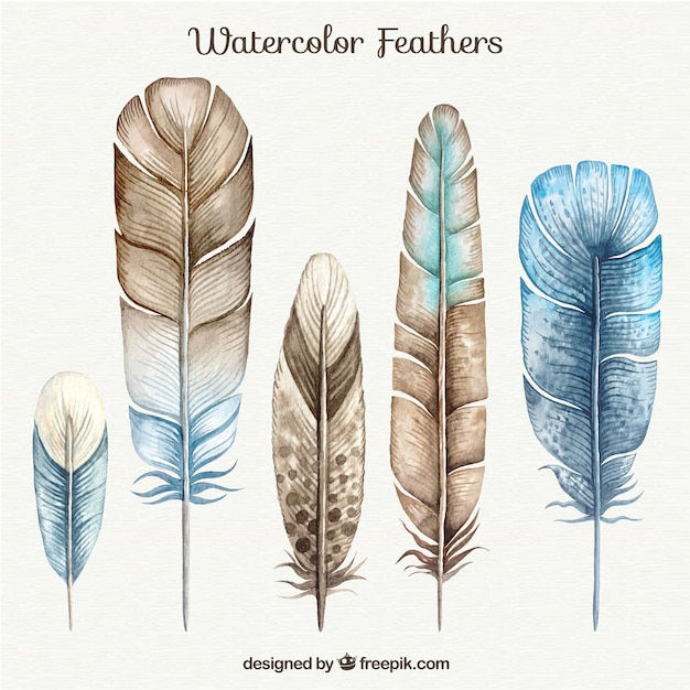 Brown and Blue Watercolor Feathers Set Vector | Free Download
