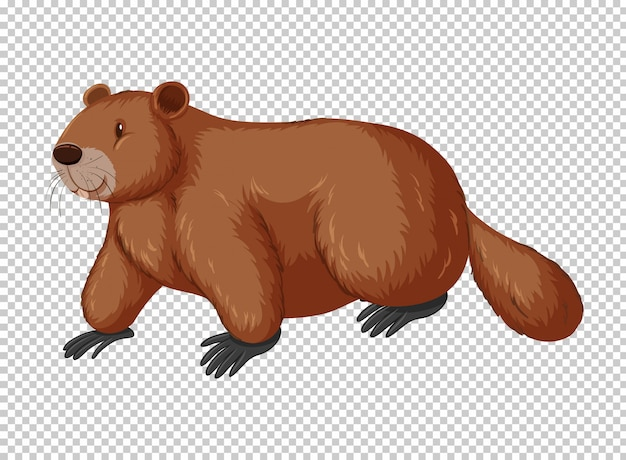 Brown beaver on transparent background Free Vector