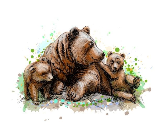 Бурый медведь-мать со своими детенышами из всплеск акварели, рисованный эскиз. иллюстрация красок Premium векторы