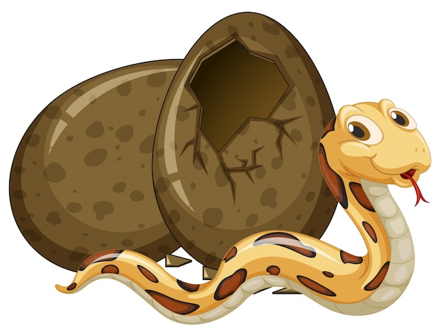 Brown snake hatching egg Free Vector
