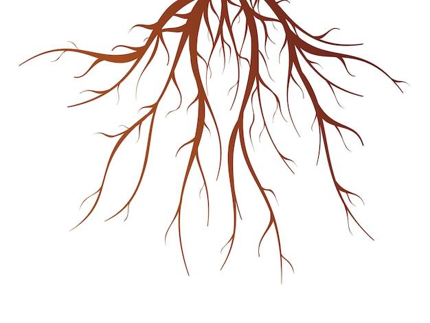 Коричневые корни деревьев плоские изолированные векторная иллюстрация Premium векторы