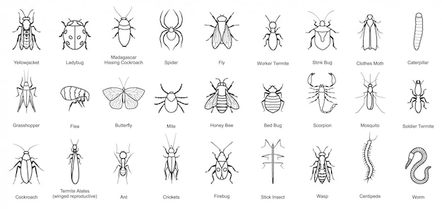 Bug of insect  line set icon. illustration insect beetle. isolated line icon bug and fly beetle. Premium Vector