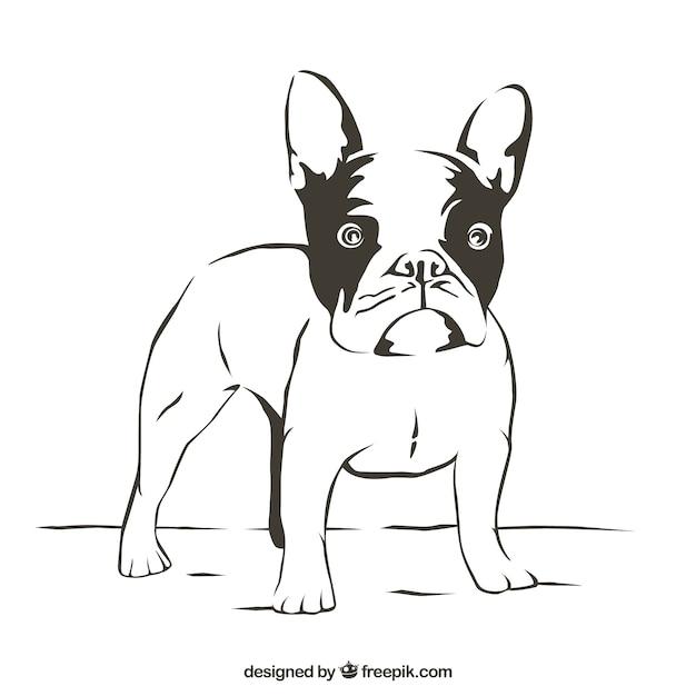 bulldog outline vector free download