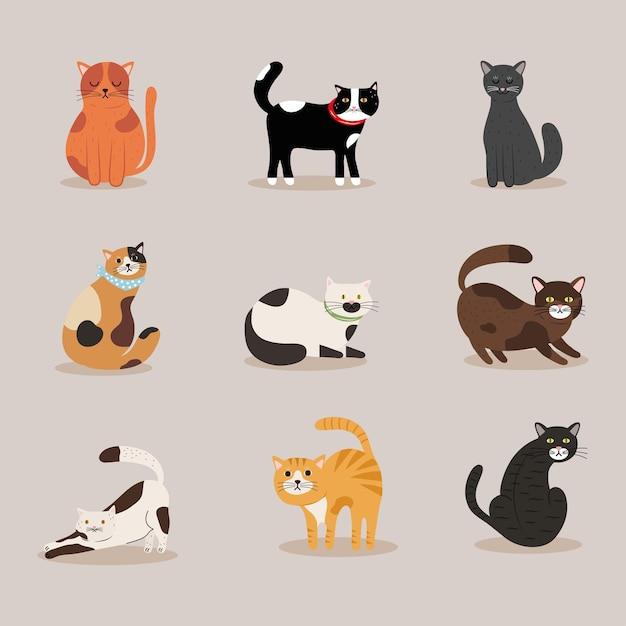 고양이 Differents 색상 마스코트 캐릭터 번들 프리미엄 벡터
