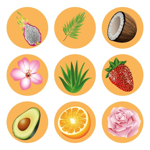 Связка из девяти тропических фруктов и растений набор иконок иллюстрации Premium векторы