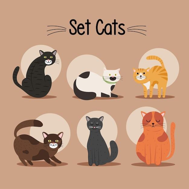 여섯 고양이 Differents 색상 마스코트 및 글자 번들 프리미엄 벡터