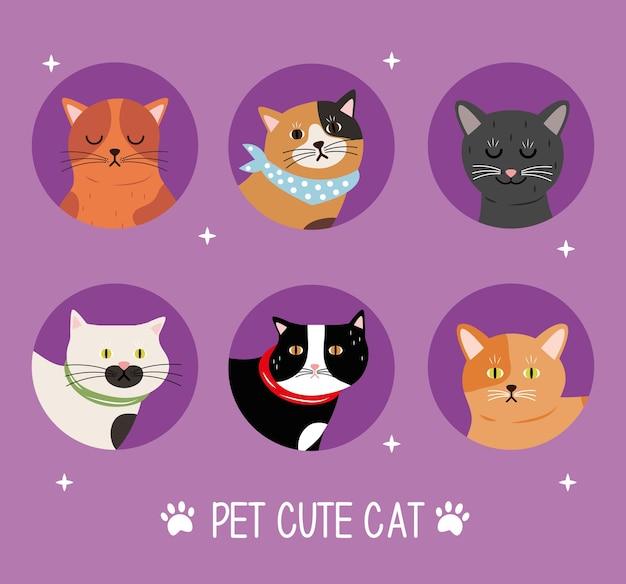 여섯 고양이 Differents 색상 애완 동물 및 글자 번들 프리미엄 벡터