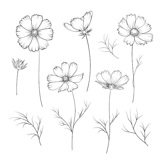 Fiore di ranuncolo isolato. Vettore gratuito