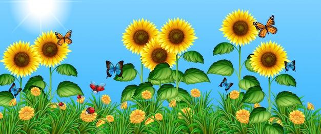 ひまわり畑を飛んでいる蝶 無料ベクター
