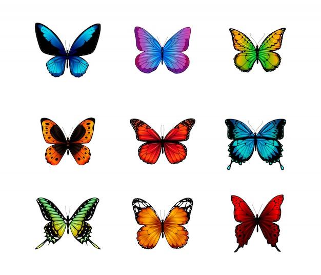白い背景で隔離の蝶。 Premiumベクター