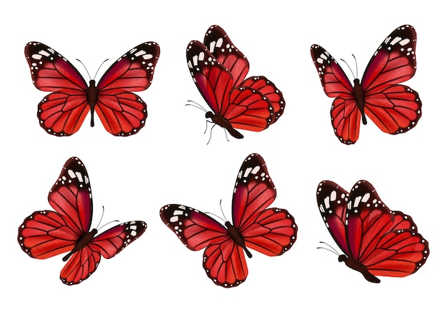 Butterflies. realistic colored insects beautiful moth vector collection of butterflies. illustration set of flying butterfly red black Premium Vector