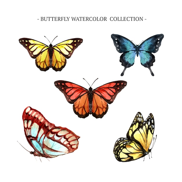 Butterfly collection with watercolor Free Vector