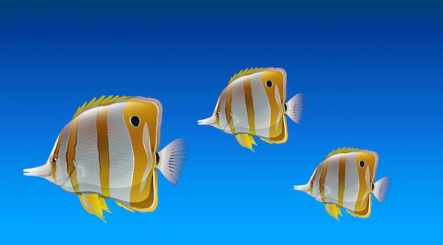 蝶の魚 Premiumベクター