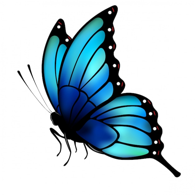 白い背景の上の大きな青い翼を持つ蝶します。 Premiumベクター