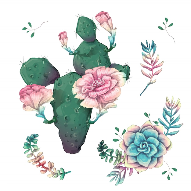 Cacti hand drawn on a white background. Premium Vector