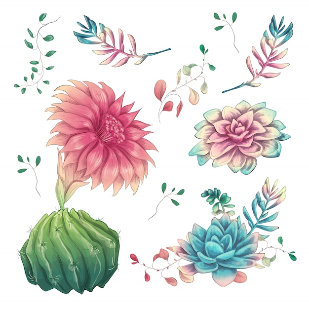 Cacti hand drawn on a white background Premium Vector