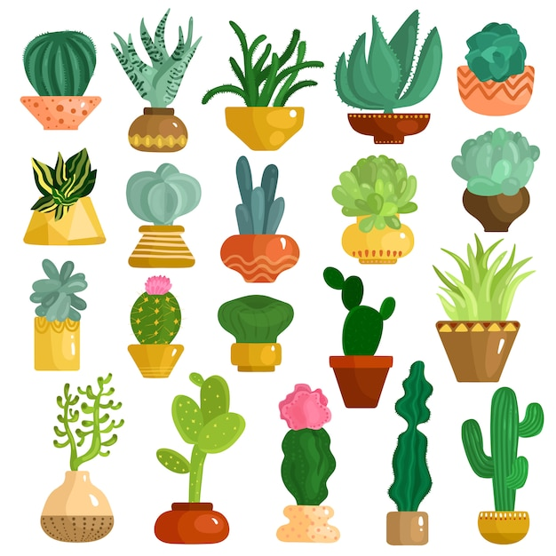 Cacti succulents in pots set Free Vector
