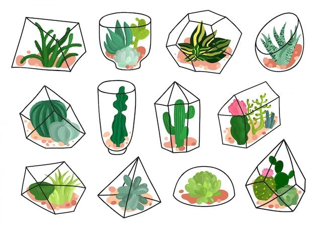 Набор геометрических флорариумов cacti succulents Бесплатные векторы