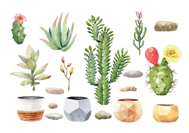 Cactus cacti succulent and stone with tree pot. Premium Vector