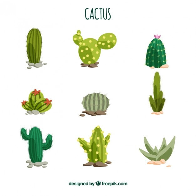 Cactus collection vector premium download for Cactus imagenes