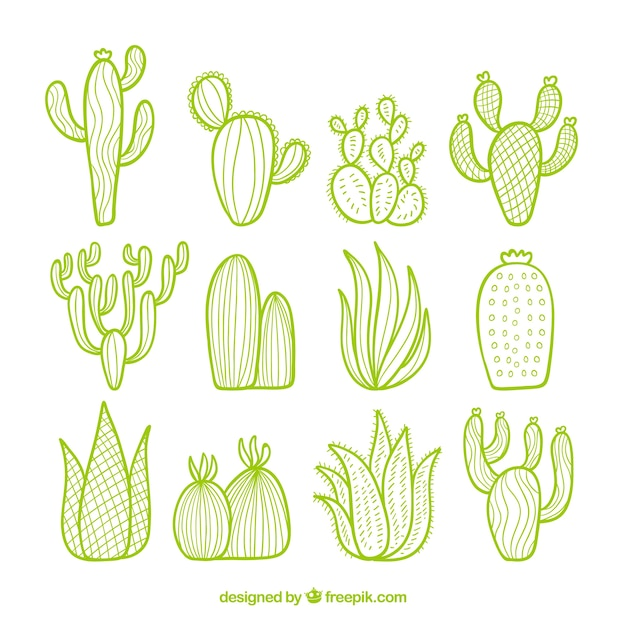 Cactus pack with hand drawn style Premium Vector