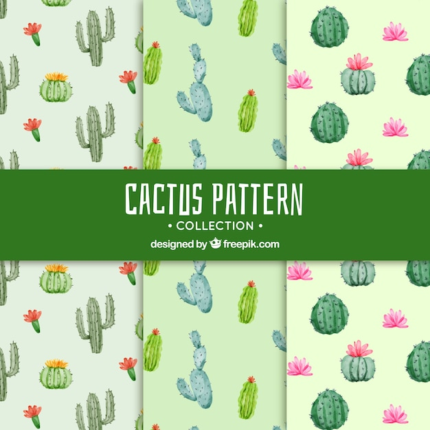 Cactus patterns with lovely style Free Vector