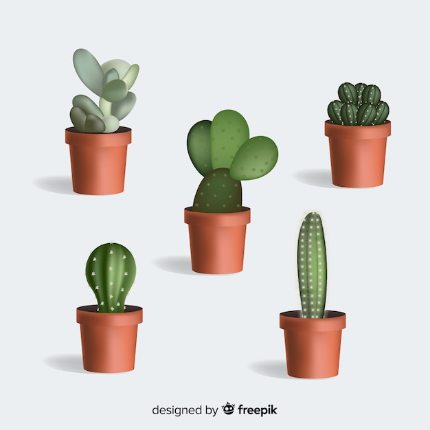 Cactus plant in realistic style Free Vector